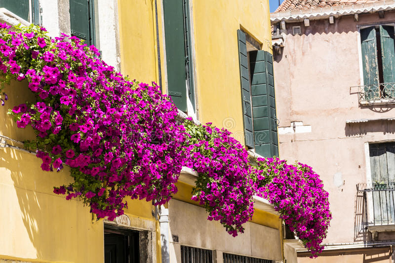 Antique yellow building decorated with pink blooming petunia flowers in Venezia. Antique yellow house with balcony with pink blooming petunia flowers in Venezia stock image