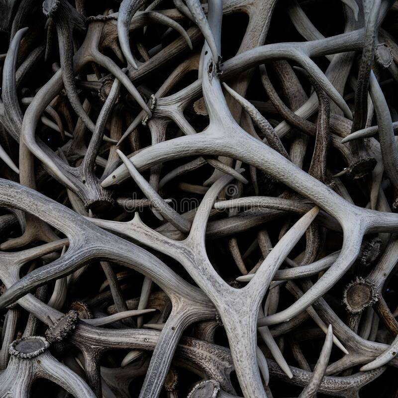 Antler Arch close-up stock foto