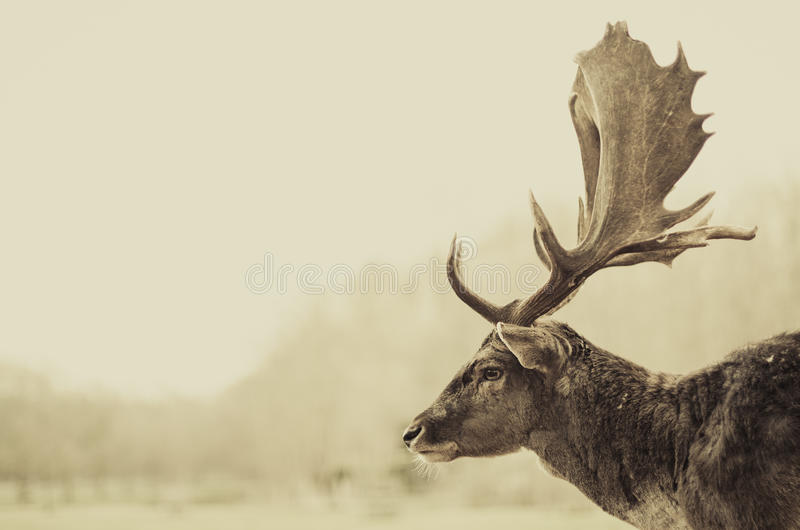 Antler thoughts stock photos