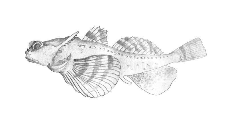 Antlered sculpin för fisk Dra realistisk bild royaltyfria bilder