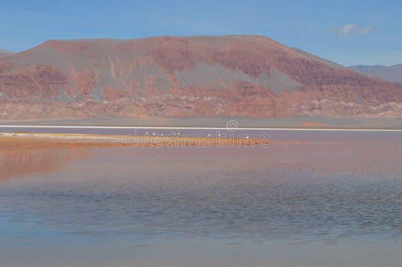 Antofagasta DE La Sierra stock foto's