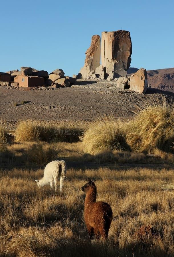 Antofagasta De Los Angeles Sierra, północny zachód Argentyna zdjęcie stock