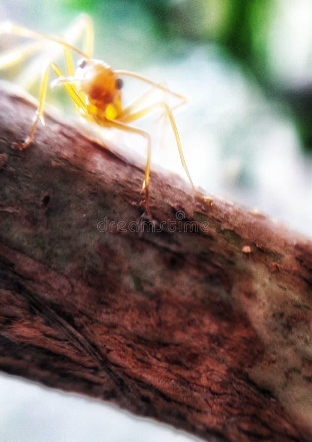 Antología de hormigas imágenes de archivo libres de regalías
