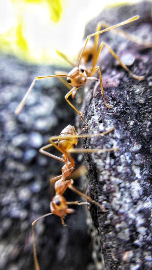 Antología de hormigas imagen de archivo libre de regalías