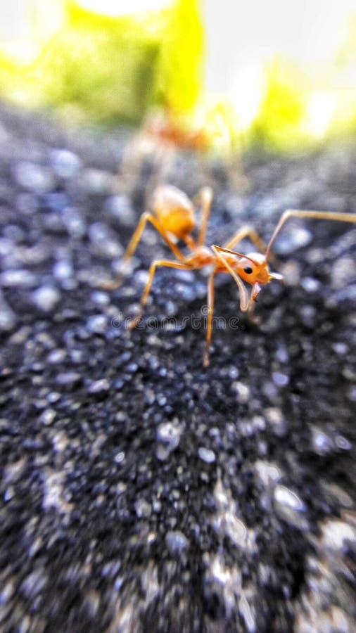 Antología de hormigas imagen de archivo