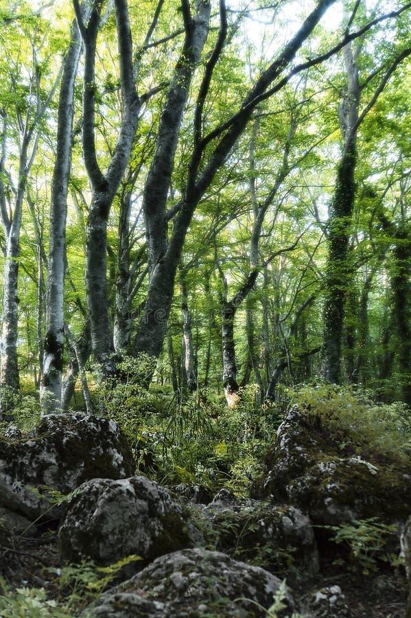 ` Antonio Forest de Bosco di Sant, Abruzzo, Itália fotos de stock