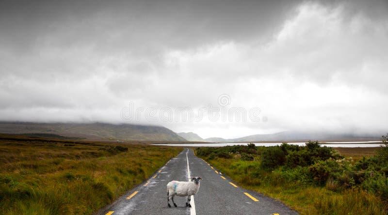 Antreiben in Irland lizenzfreies stockbild