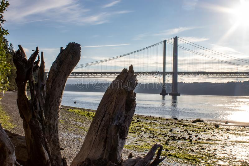 Antriebholz entlang Strand nahe Tacoma verengt Brücke stockfoto