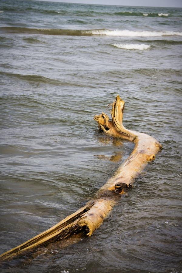 Antriebholz wusch sich oben auf dem Ufer vom Ontariosee stockbilder