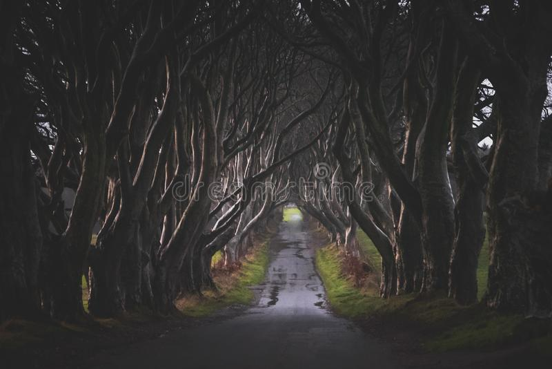 ANTRIM, NORTHER IRELAND, DECEMBER 20, 2018: The Dark Hedges in Northern Ireland. Majestic, spooky and mysterious road across very. Old trees. Featured in the royalty free stock image