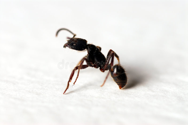 The Ants royalty free stock photography