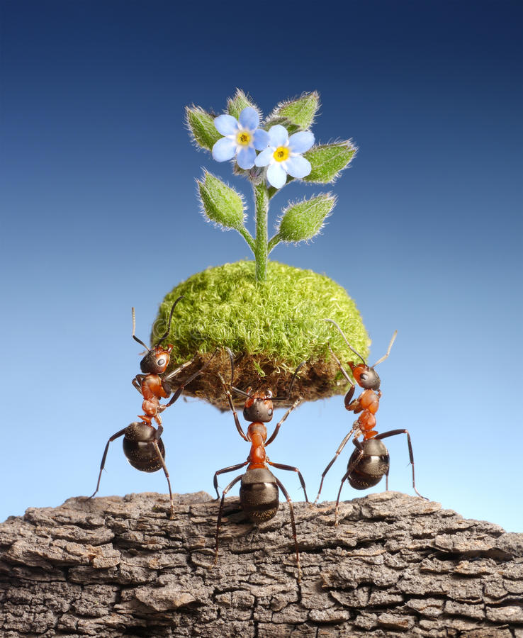 Ants bring living nature on dead rocks, concept. Eco concept. Ants bring piece of living nature at empty rock. Federal ant programs in some countries help