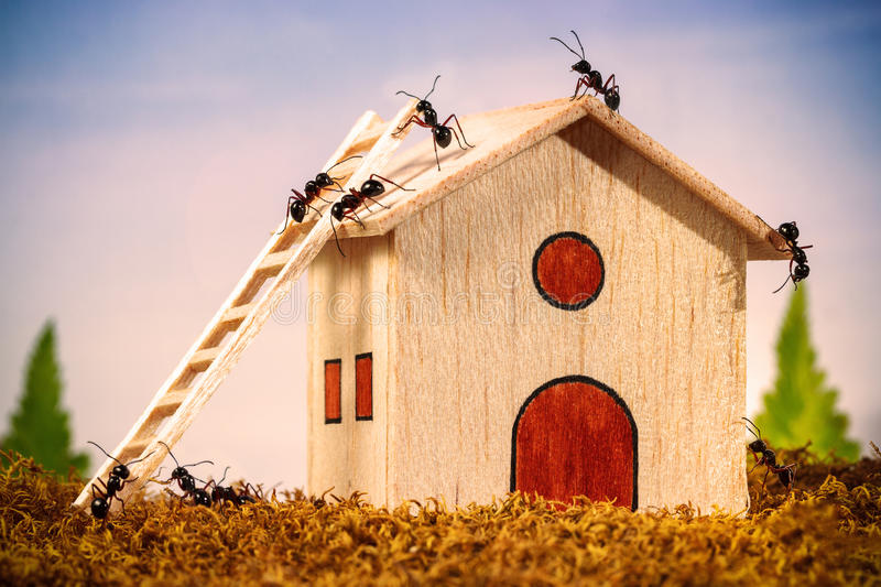 Ants build a house with ladder stock image