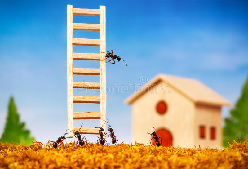 Ants build a house with ladder royalty free stock photos