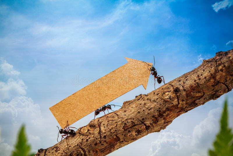 Ants carry rising arrow for business graph royalty free stock photo