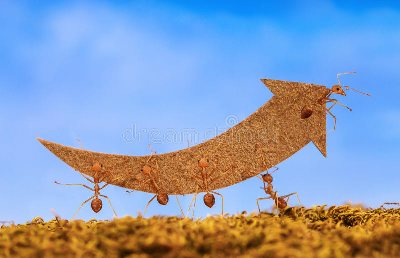 Ants carry rising arrow for business graph. Business and teamwork concept stock photos
