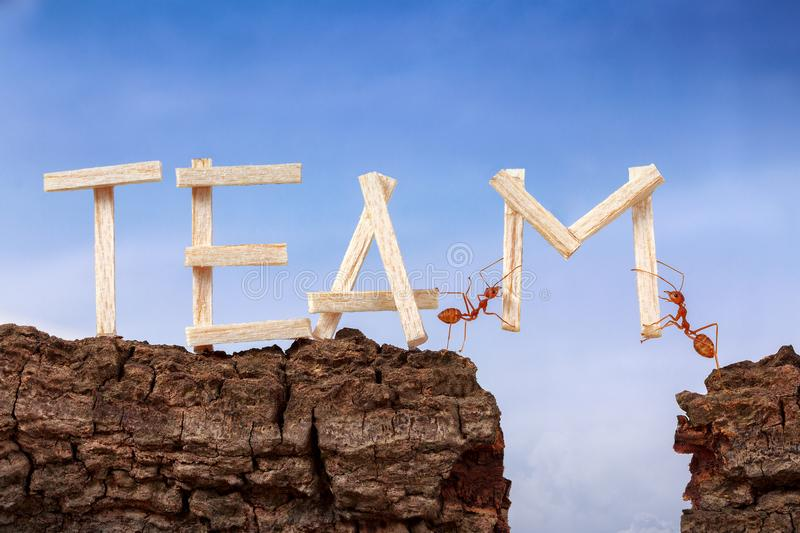 Ants carry word team across wooden cliff with sky background stock image