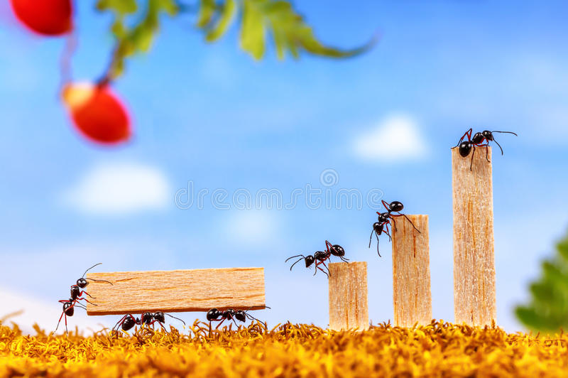 Ants carrying wording team royalty free stock photo