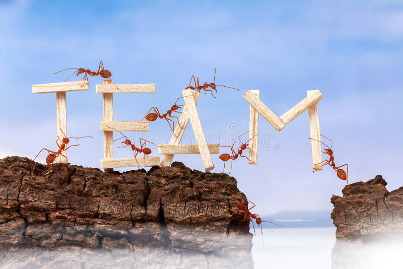 Ants carrying wording team. Teamwork concept stock image