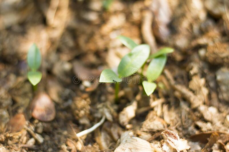 Ants cling on sprouting trees royalty free stock photo