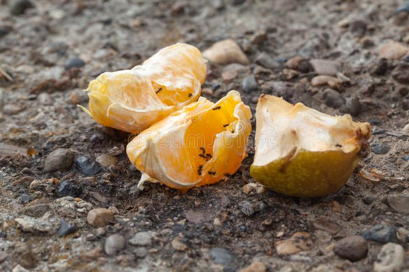 Ants creep over the remains of food after people, nature absorbs. Garbage stock photo