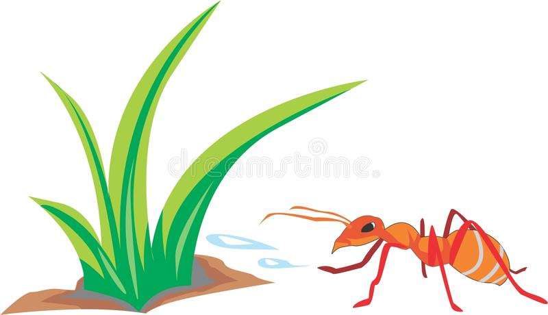 Ants are diligent. An ant that is affectionate with the environment royalty free illustration