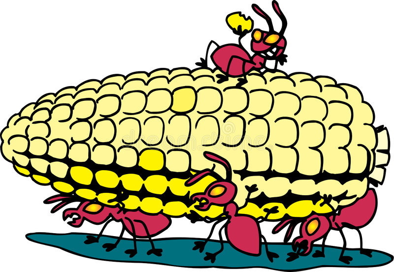 Ants eating corn stock illustration