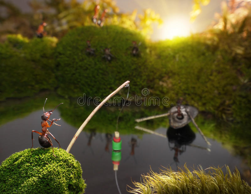 Download Ants Fishing On Sunrise, Ant Tales Stock Photo - Image: 24366714