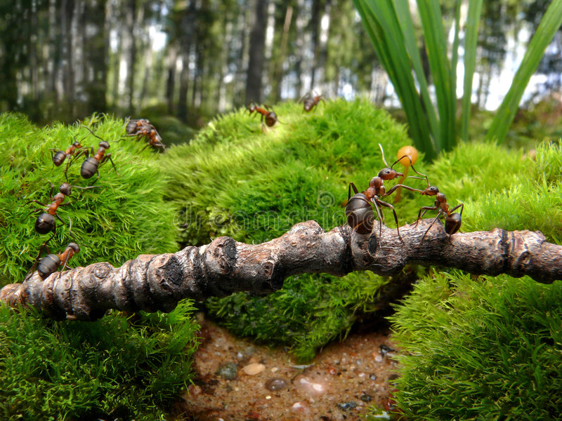 Download Ants go to school stock image. Image of cooperation, autumn - 3621747