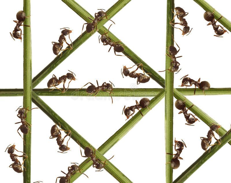Ants on a green grass. royalty free stock images