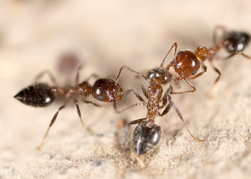 Ants on the ground royalty free stock photography