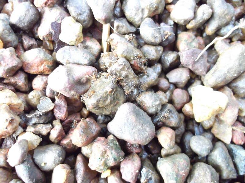 Ants stock photography