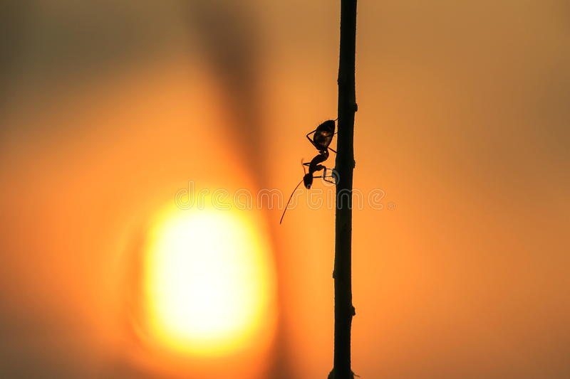 Ants,insects. royalty free stock image