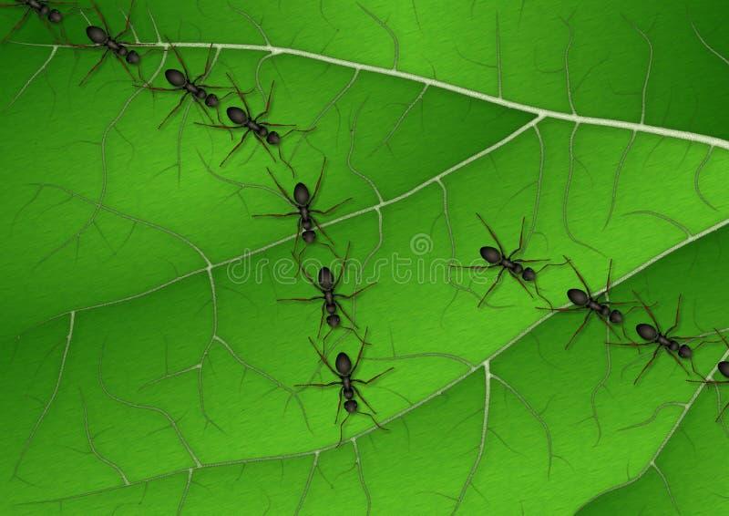 Download Ants on leaf stock illustration. Image of split, illustration - 25653372