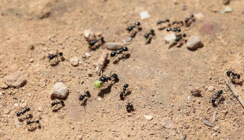 Ants path detail royalty free stock images
