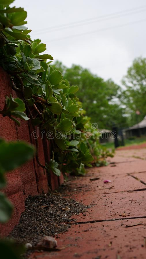 Life on a sidewalk royalty free stock photography