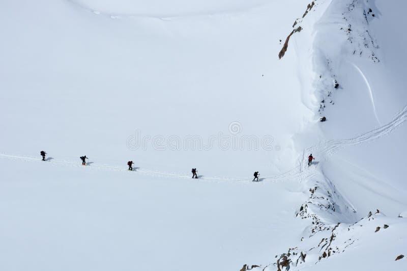 Ants in the snow stock photos