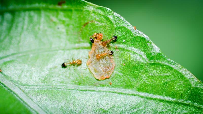 Ants teamwork stock photo