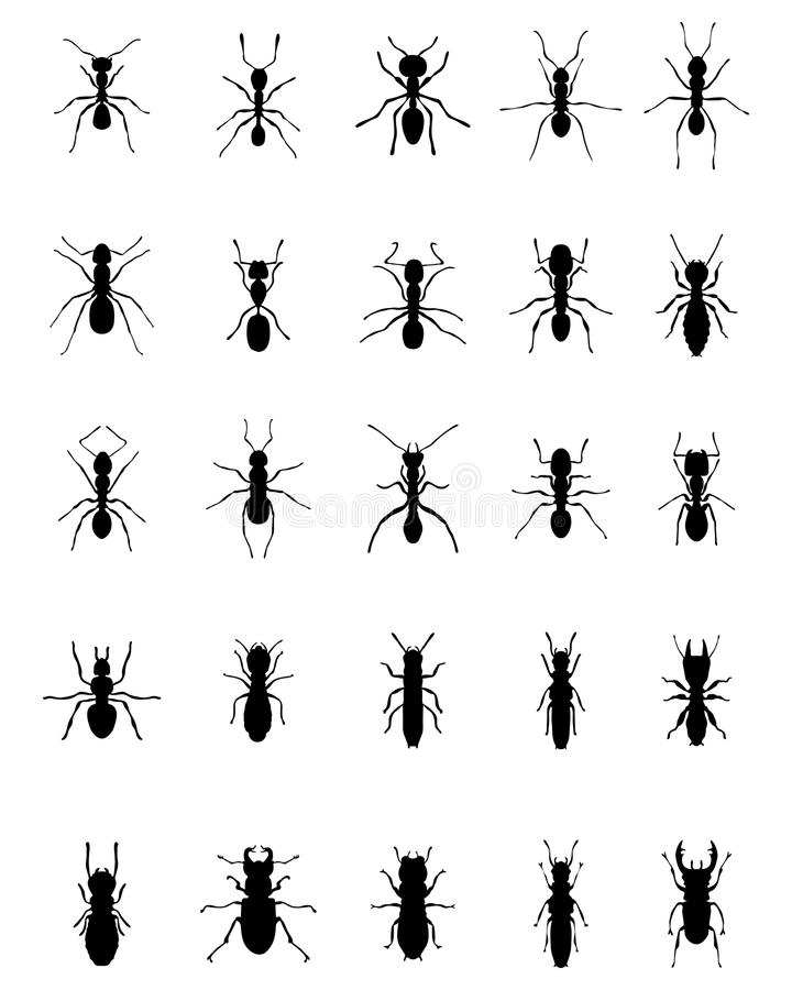 Ants and termites stock image