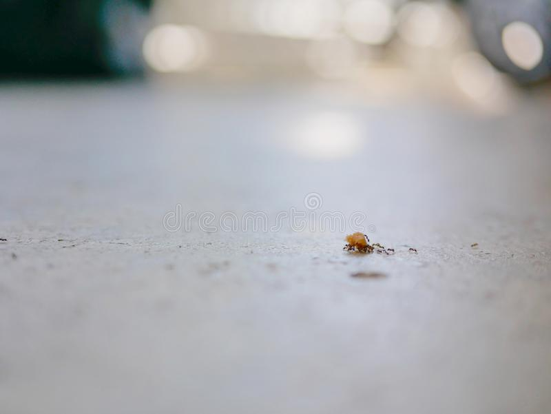Ants working as a team carrying bread crumbs on a concrete floor royalty free stock image