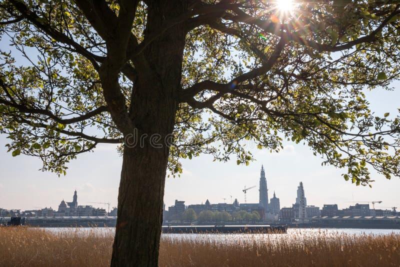 Antwerpen Belgium pogodny pejza? miejski zdjęcie stock