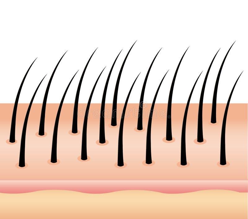 Anty Dandruff na włosy, włosiany skalp włosy i skalpu traktowanie włosy na skalpie dla reklamy royalty ilustracja