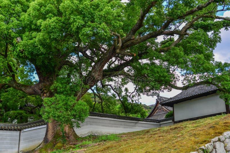 Antyczna świątynia z ogromnymi drzewami zdjęcie royalty free