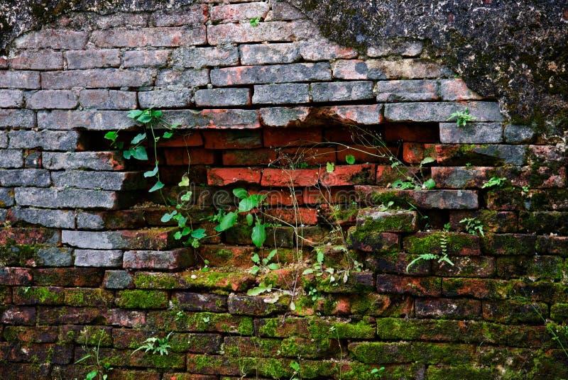antycznego brickwall mech stara tekstura zdjęcie stock