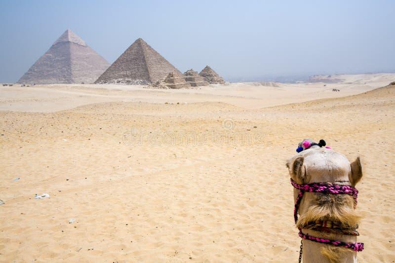 Antyczni ostrosłupy Giza fotografia royalty free