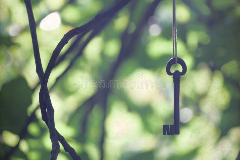 Antyczny dokonanego żelaza klucza obwieszenie między gałąź fotografia royalty free