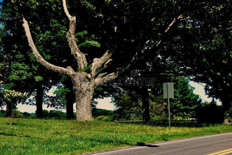 Antyczny drzewo z bliznami i łamanymi kończynami zdjęcie stock