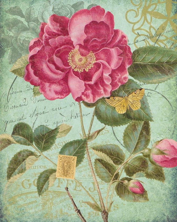 Antykwarski Botaniczny kolaż menchii róża Francuski Postmark Epehmera i pismo - Painterly tło - Podławy szyk - Nowa zieleń - royalty ilustracja