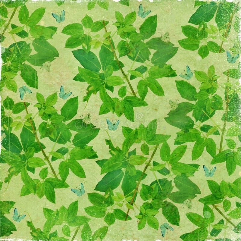 Botaniczny antykwarski rocznika tło obrazy royalty free