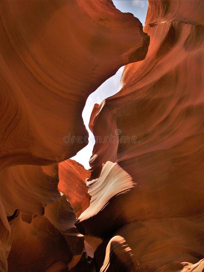 antylopy Arizona jar niski zdjęcia royalty free